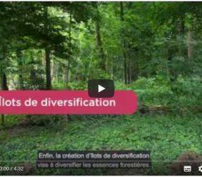Des aménagements pour restaurer la forêt