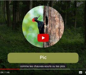 Restauration du bois de la Béguinière : les aménagements réalisés