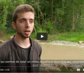 Compensation écologique et aménagements en faveur des tritons